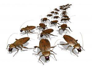 Cockroachs
